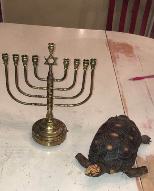 A+traditional+menorah+of+the+Gail+household.