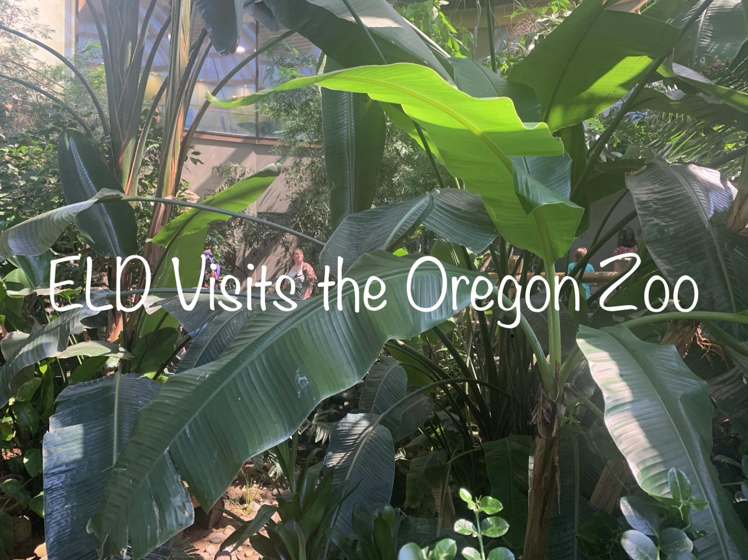 Students visited the Oregon zoo. After a quick lesson, they were able to walk around and see the other exhibits.