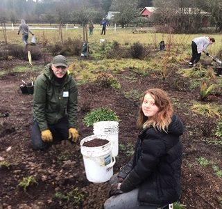 Environmental club planting pollinator plants.