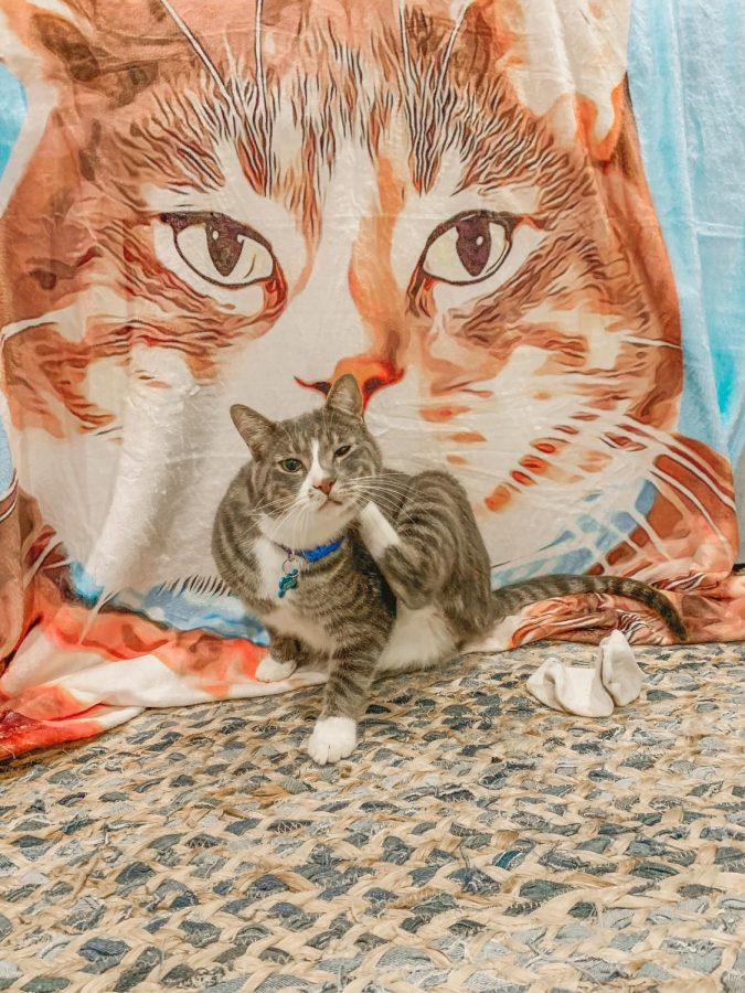 Jug and his portrait blanket