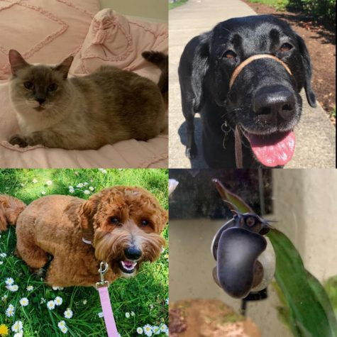 Ella, Nika, Poppy and Phillip are beloved pets of WBN staff. Take the quiz to find which you are most like.