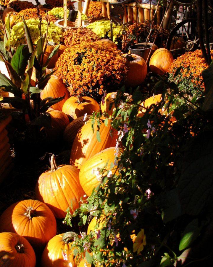 Fall time at Baumans Farms!